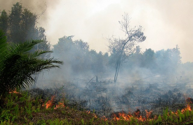 Forest fires are mostly caused by human activity. Palangkaraya, Central Kalimantan, Indonesia, September 2011.   Photo by Rini Sulaiman/ Norwegian Embassy for Center for International Forestry Research (CIFOR).