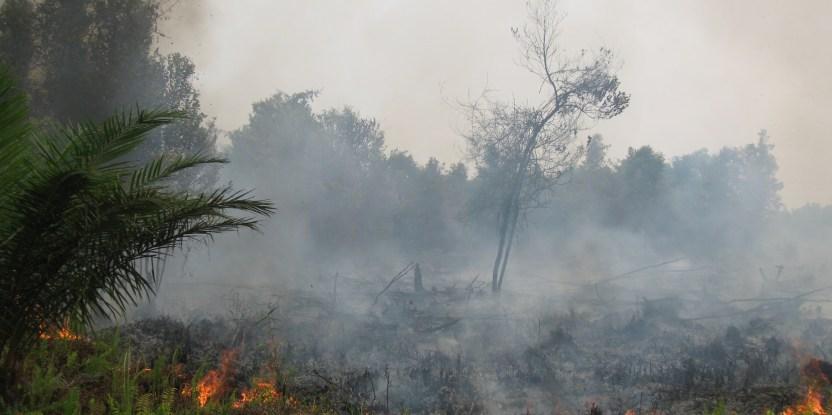 Kebakaran hutan banyak disebabkan oleh ulah manusia. Palangkaraya, Kalimantan Tengah, Indonesia, September 2011.   Foto: Rini Sulaiman/ Kedutaan Besar Norwegia untuk Center for International Forestry Research (CIFOR).
