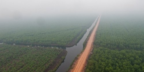 Asap akibat kebakaran hutan di perkebunan kelapa sawit di provinsi Riau, Sumatera, Indonesia, menyelimuti lanskap. Foto @CIFOR