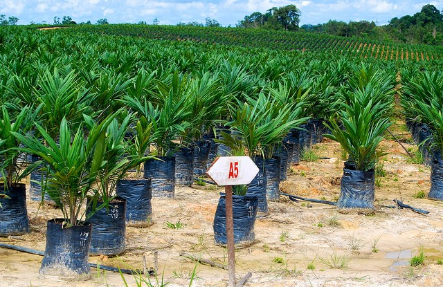 The past two or three years have seen several smallholder groups become RSPO and ISCC certified.
