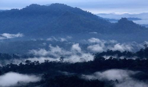 Bosque en el Valle de Danum, Sabah, Malasia. La definición de los diferentes tipos de bosque puede ayudarnos a evaluar la disyuntiva entre desarrollo y manejo forestal. Foto M. Edliadi/CIFOR.