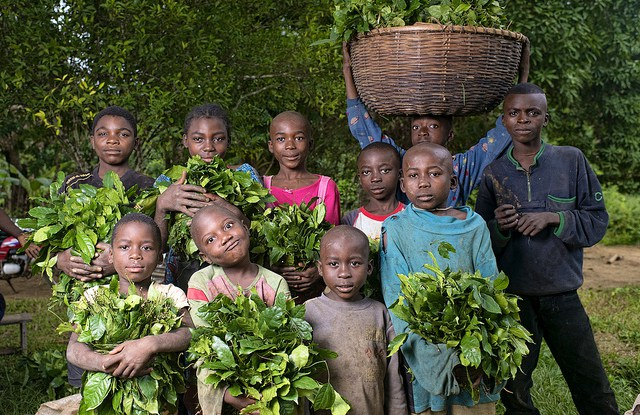 A recent study of community forest management committees in six villages of southeastern Cameroon found only one person under 30 years of age among their members.