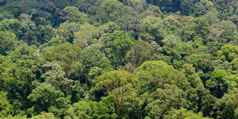 The world's tropical forests are our climate safety net – our layer of protection from global warming.