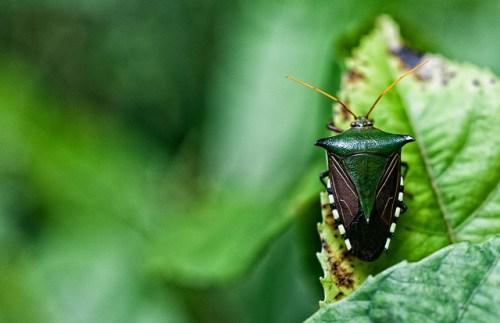 """Hutan Amazon menjadi tempat tinggal beragam keragaman hayati di dunia dan menyimpan sejumlah besar karbon – tetapi juga rumah bagi lebih dari 30 juta orang. Klik di sini untuk membaca """"Pelajaran dari Amazon,"""" laporan khusus riset CIFOR untuk membantu hutan dan masyarakat di wilayah tersebut.Marco Simola @CIFOR"""