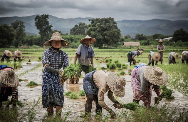 There is little awareness among the community about REDD+ programs in Myanmar, according to research.