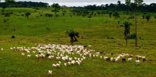 Bentang alam dekat Rio Branco, Acre, Brasil. Peternakan merupakan pendorong utama deforestasi di Brasil. Kate Evans/Foto CIFOR