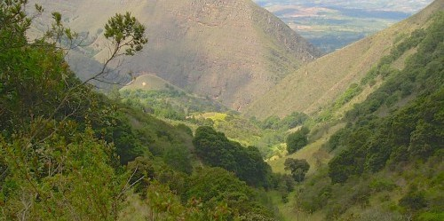 Daerah aliran sungai Chaina di Kolombia. Negara Amerika Selatan ini memimpin dalam upaya restorasi ekologis, bahkan jika beberapa upaya tersebut tidak berhasil. Sven Wunder/Foto CIFOR