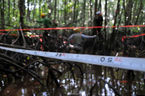 Various tools, ideas and concepts had been developed to calculate the carbon stored in forests. <em>Kate Evans/CIFOR.</em>