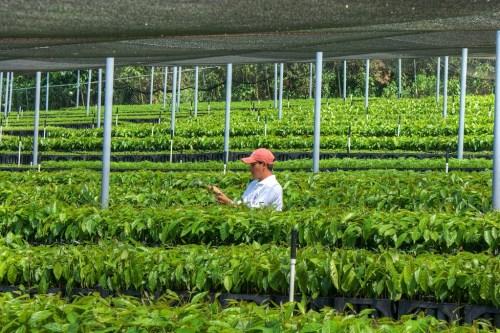 Un nuevo estudio de CIFOR advierte que las actividades de reforestación realizadas con el único objetivo de almacenar carbono pueden tener impactos negativos. Foto cortesía de Jesús Perez Cc.