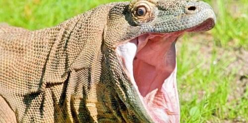 Peneliti mengkaji distribusi keragaman hayati di Indonesia – mamalia, burung, reptil, dan amfibi, serta 8 keluarga tanaman – menggunakan tiga parameter kekayaan keragaman hayati. Foto: wikicommons