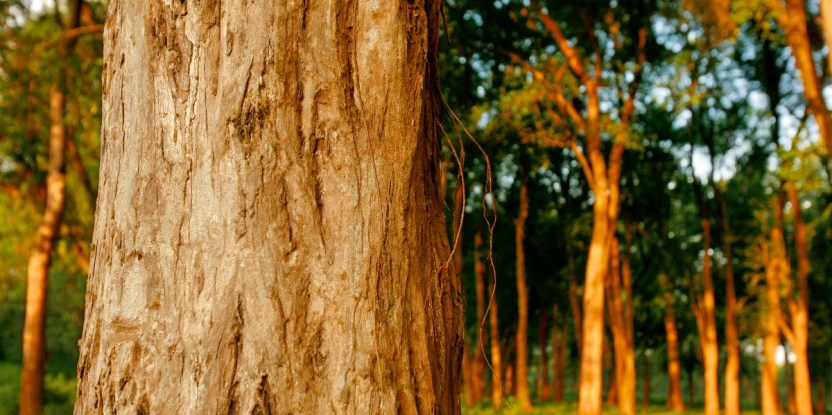 Investors are following a growing demand for more sustainably sourced wood products. Murdani Usman/CIFOR