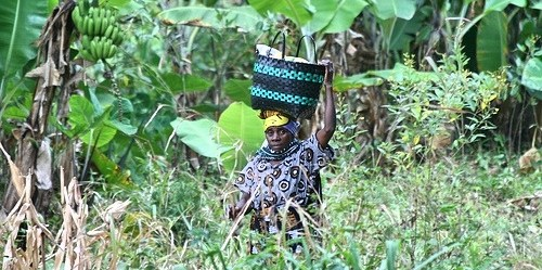 Wild foods can play an important role in making good food choices, particularly in areas where buying food at a market can be expensive, such as in Tanzania. Suzanne York.