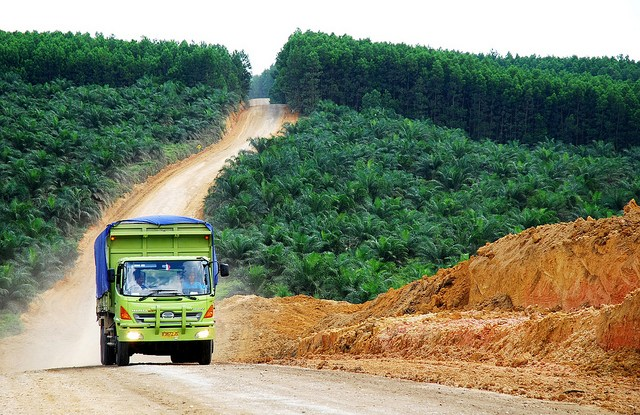 Changing corporate practice in the palm oil industry give room for optimism, scientist say. Ryan Woo/CIFOR.