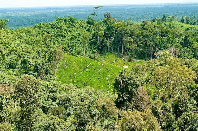 The long road to 'zero deforestation' … whatever that means