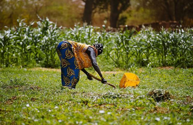 Pour les femmes, plus de travail au niveau de l'agriculture signifie parfois un statut plus important. CIFOR