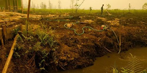 Kecil kawan besar menjadi lawan. Membakar lahan dengan api adalah cara efektif dan murah bagi petani kecil. Api menjadi kunci produksi pangan selama ratusan tahun. Aulia Erlangga/CIFOR