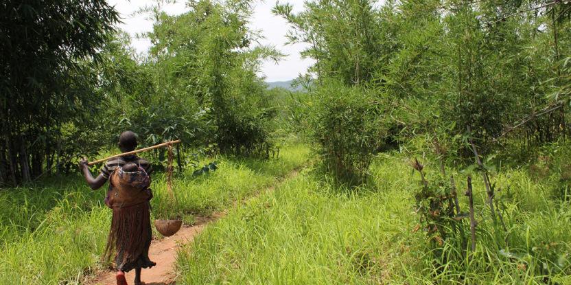 Les forêts font désormais bel et bien partie de l'agenda mondial sur la sécurité alimentaire. Bronwen Powell/CIFOR