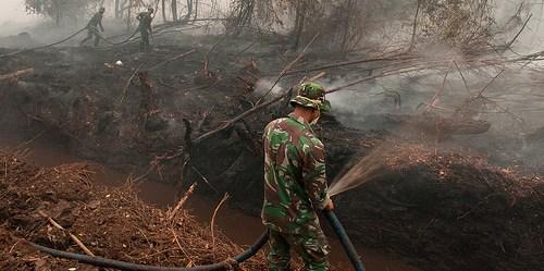 Kurang lebih 6000 anggota tentara TNI diperbantukan mengatasi kebakaran hebat tahun 2015 ini.  Aulia Erlangga/CIFOR