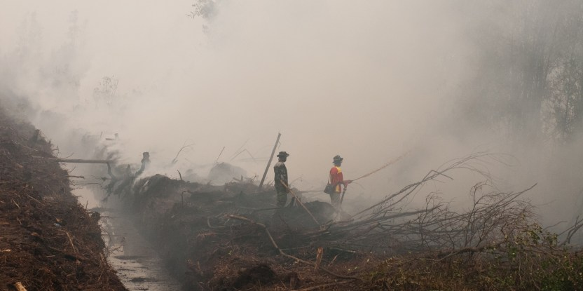 Work to prevent further fires in Indonesia must start now, experts say. Aulia Erlangga/CIFOR