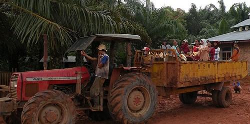 Upaya perusahaan untuk lebih lestari dalam produksi sektor kelapa sawit sepatutnya menjadikan petani skala kecil sebagai bagian penting dari proses. Agus Andrianto/CIFOR