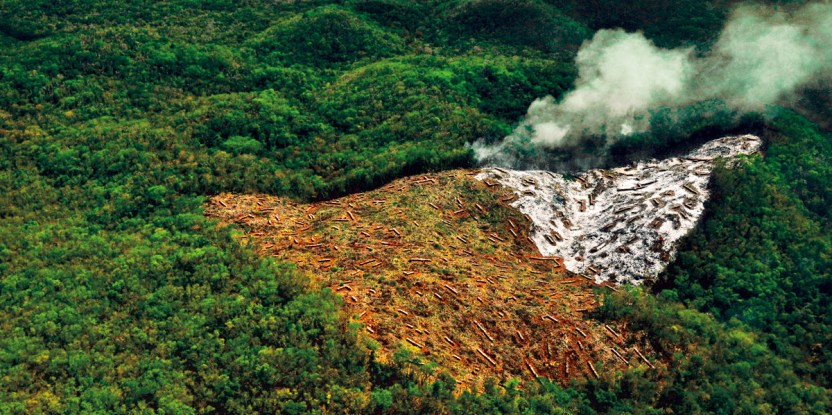 Praktik tradisional peladangan berpindah menjaga ketahanan pangan dan konservasi keanekaragaman hayati termasuk kelestarian hutan, pendapat seorang aktivis. Jonathan Guyot/Forum Bentang Alam Global