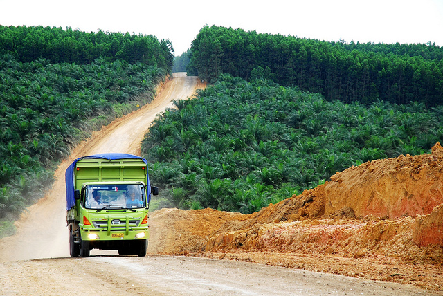 Zero deforestation in Indonesia: Pledges, politics and palm oil