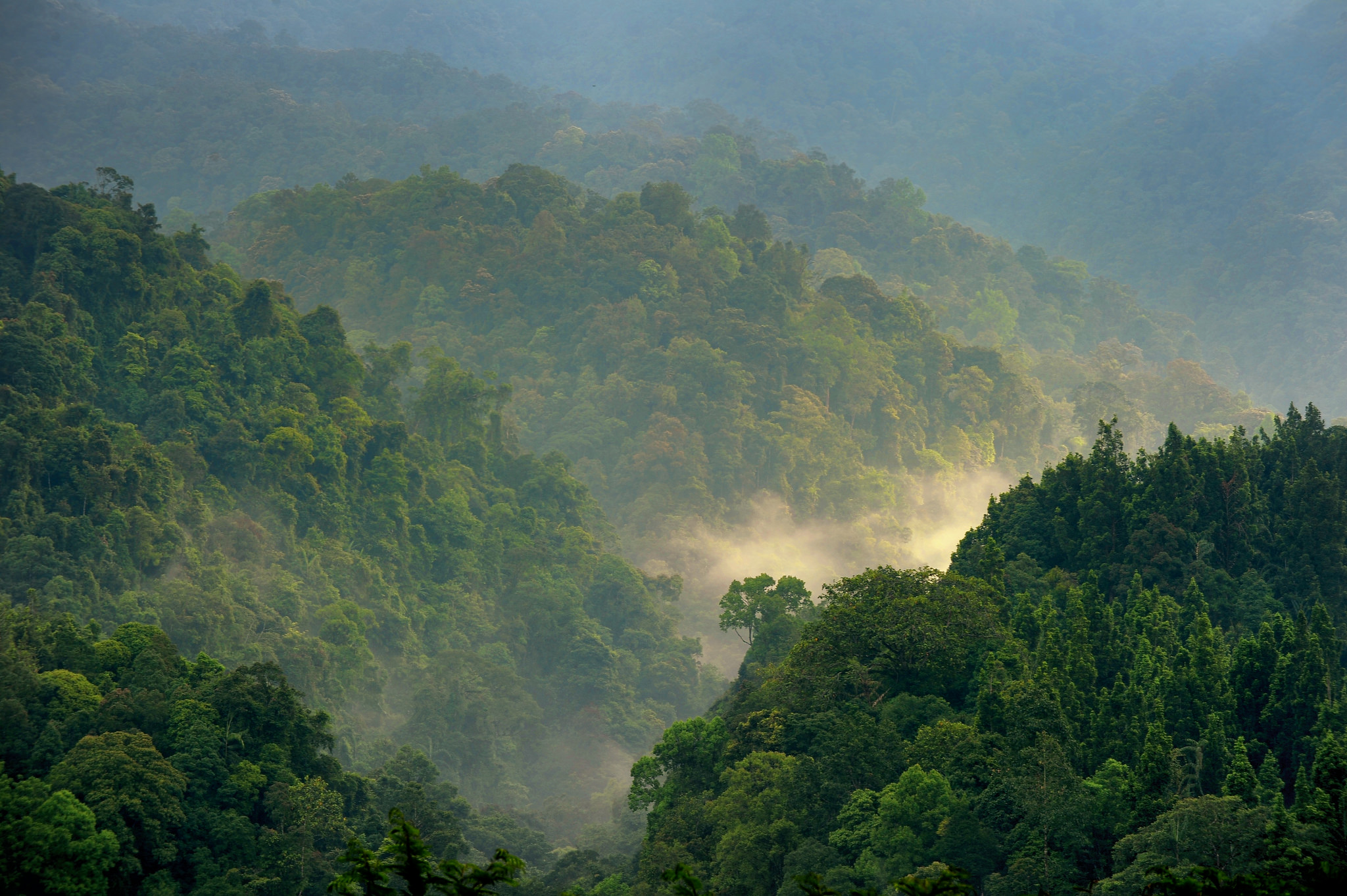 International Day of Forests 2016: What's the state of the world's forests?