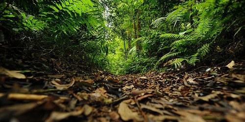 Hutan Gunung Gede Pangrango, Jawa Barat. Resentralisasi tata kelola hutan dari daerah kepada propinsi memerlukan komunikasi intensif.
