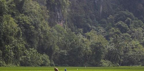 Persawahan di desa Rammang-Rammang. Hutan dan pertanian saling terkoneksi dalam mencapai Tujuan Pembangunan Berkelanjutan.