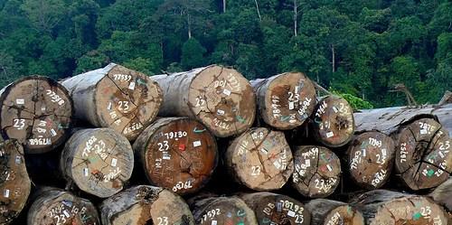 Sertifikasi kayu sebagai salah satu mekanisme tata kelola manajemen hutan.