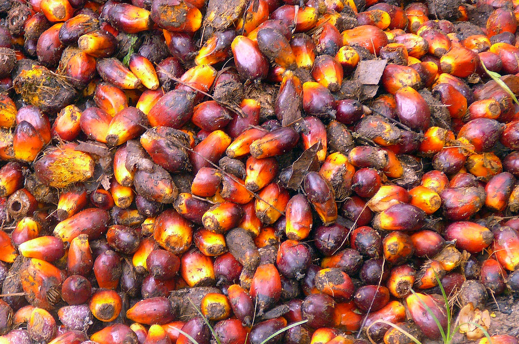 What will it take to make sustainable palm oil the norm?