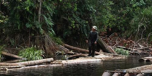 Harus ada kejelasan praktik tata kelola hutan untuk meminimalkan kerusakan di hilir dan menghindari kerugian keanekaragaman hayati.