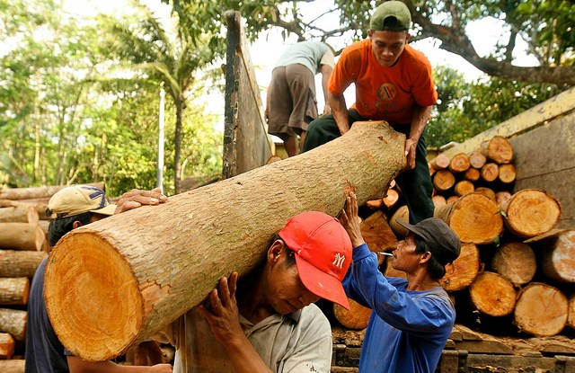 Unloading teak logs in Jepara, Central Java, Indonesia. Photo by Murdani Usman for CIFOR.