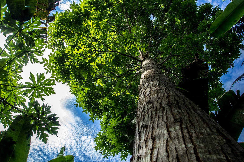 Beyond tree planting