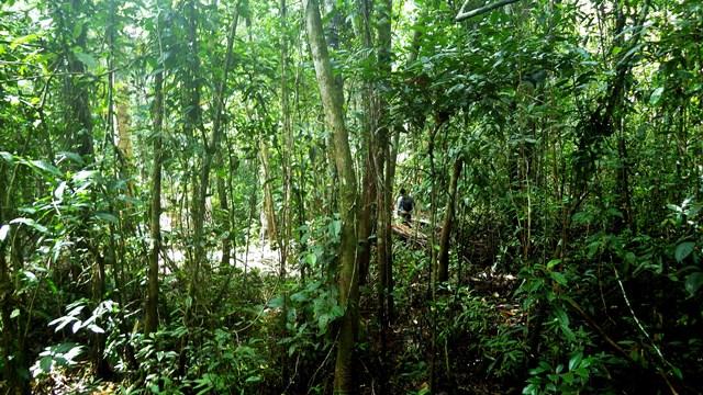 El potencial de las turberas peruanas frente al cambio climático está siendo subestimado