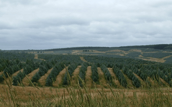 'Green deserts' or functional forests?