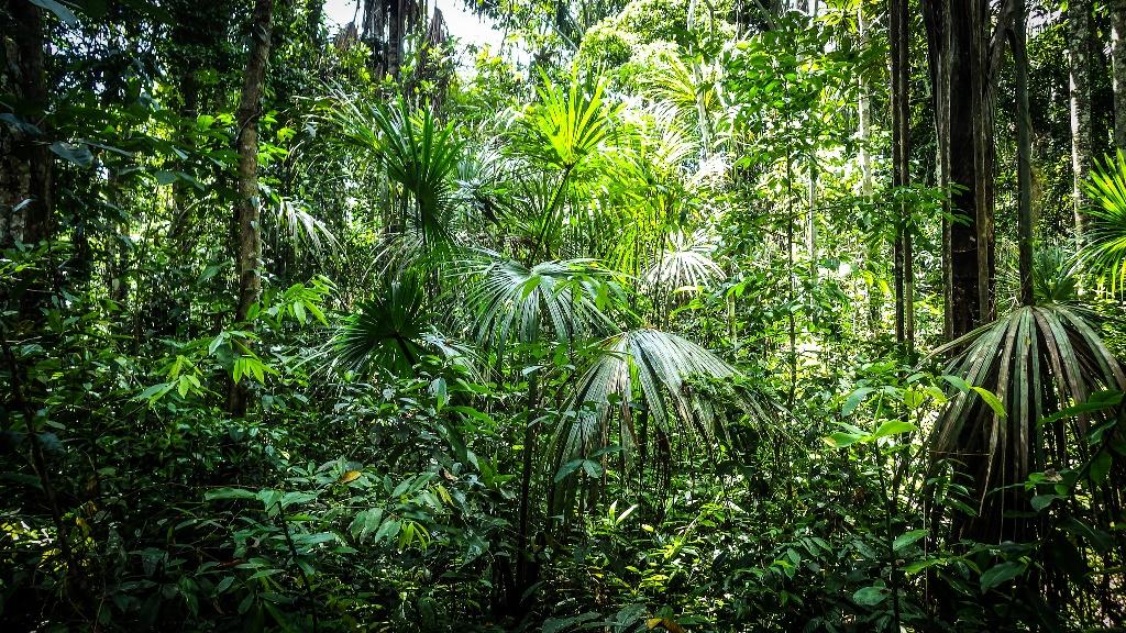 Turberas peruanas ¿problema o solución frente al cambio climático?