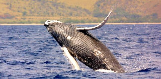 6. Whales Tour