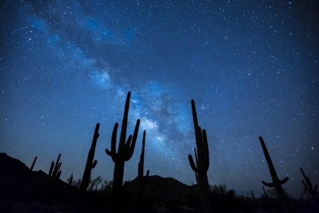 Arizona Cactus under the star night