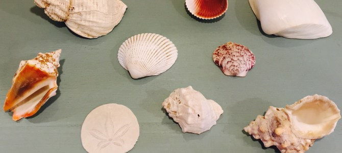 Life in a Seashell