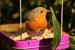 Alimentos básicos que mantendrán sana a tu ave