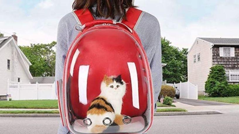 transportadoras: lleva a tu mascota a todas partes