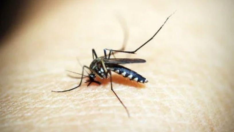 Importancia de usar repelente de insectos