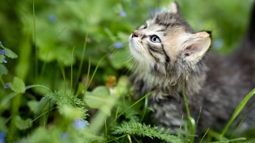 ¿Sabes qué causa el Catnip en tu gato?