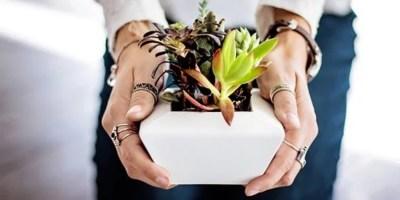 6 razones para tener suculentas en tu hogar