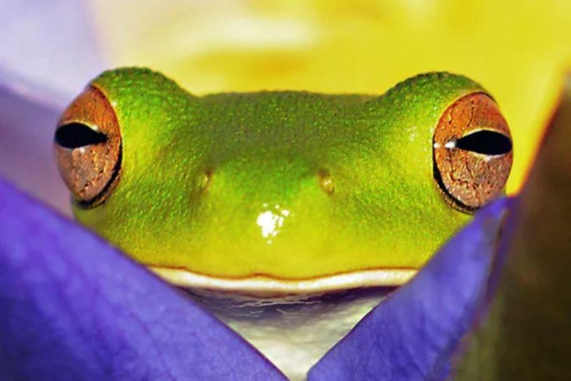 9 datos curiosos acerca de las ranas