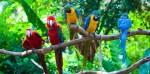 Descubre 5 curiosidades sobre los loros, las aves más humanas y fascinantes