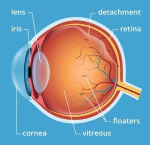 Natural Treatment Retina Detachment