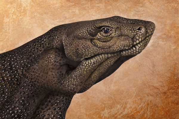 Handimals-Guido-Daniele-13
