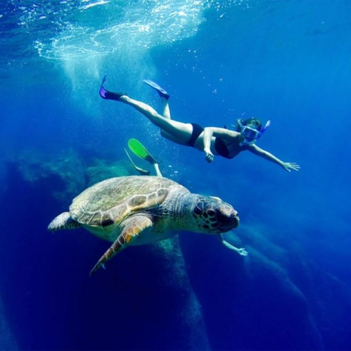 isole greche più belle: Zante è l'isola su cui le tartarughe Caretta Caretta vanno a depositare le uova